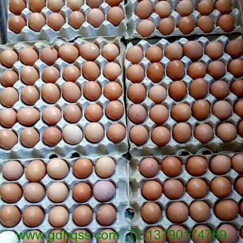 普通鸡蛋.jpeg